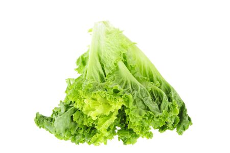 soilless cultivation: Lettuce on a white background