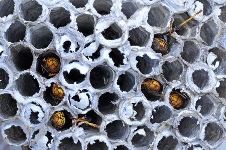 joint effort: bees in the hive