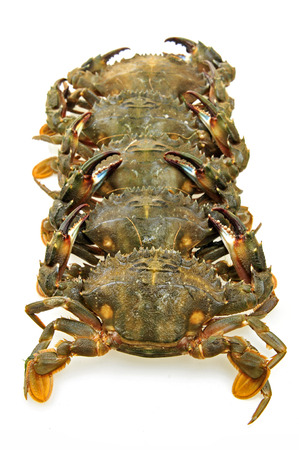 decapods: crabs on a white background