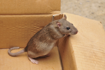 furtive: Mouse in the box