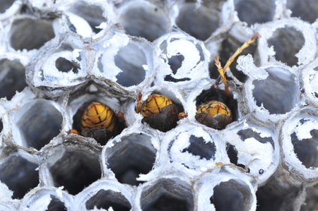 joint effort: The bees in the hive