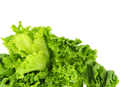 agronomic: Lettuce on a white background