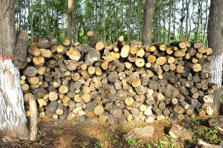 heap: heap of woods