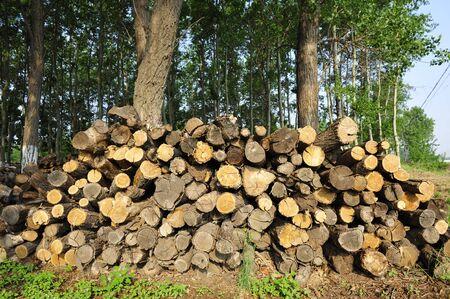 heap: a heap of woods