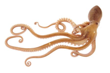 Octopus on a white background Imagens - 45249854