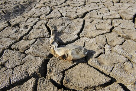 morbidity: In dry dead fish on the ground Stock Photo