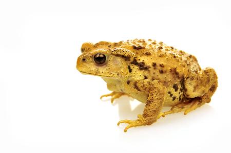 animals amphibious: frog
