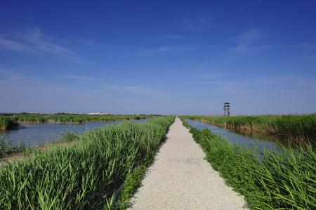 wetland: The wooden bridge on the river Stock Photo