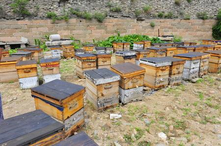 apiary: apiary Editorial