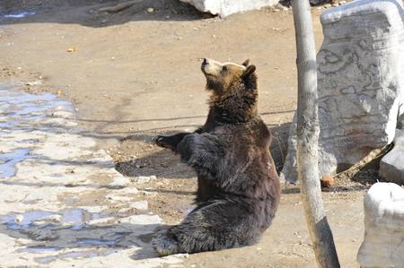 airs: The bear