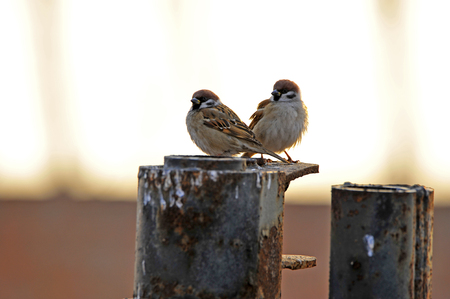 passerby: The sparrow
