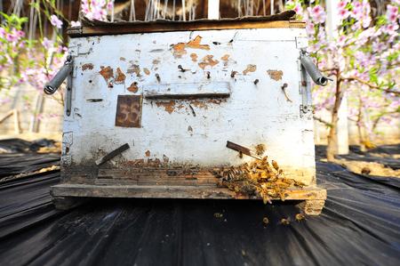 apiary: apiary Stock Photo