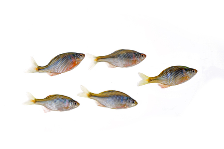 cold background: The fish on a white background