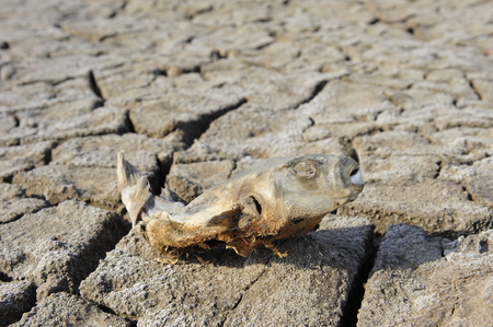 dead fish: dry dead fish on the ground Stock Photo