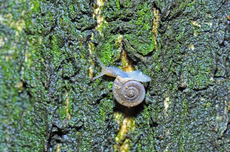 slithery: The snail Stock Photo