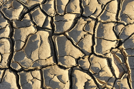 parched: parched ground
