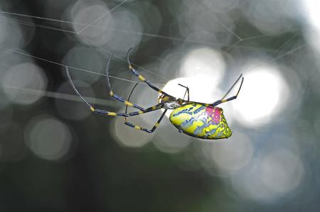 arachnids: The spider