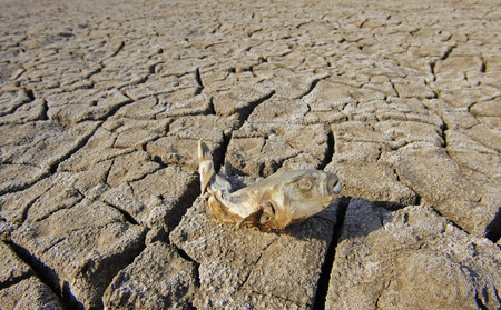 morbidity: dry dead fish on the ground Stock Photo
