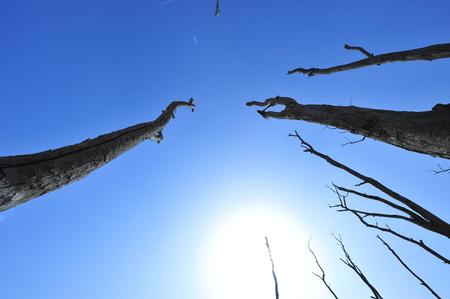 Dry desert landscape of trees