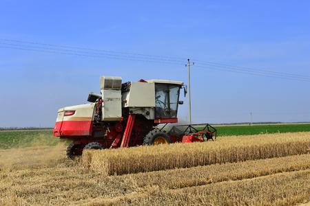 Harvester in wheat