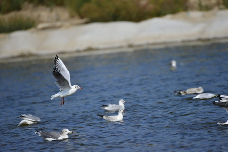 The sea birds in the lake