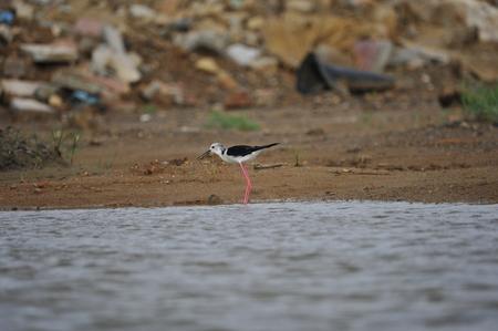 The sea bird Stock Photo