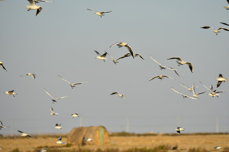 View of a flock of sea birds flying in the sky