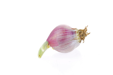 Garlic on a white background  Stock fotó