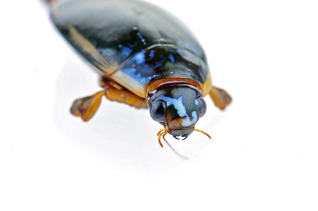 Yellow border on a white background screen, a water beetles