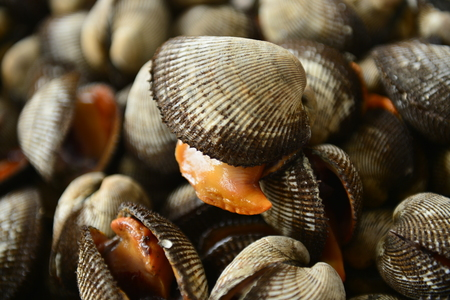 Shellfish Marine animals