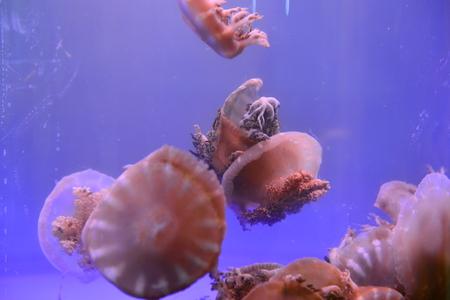 The jellyfish Stock Photo
