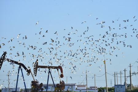 Oil pump and a beautiful bird
