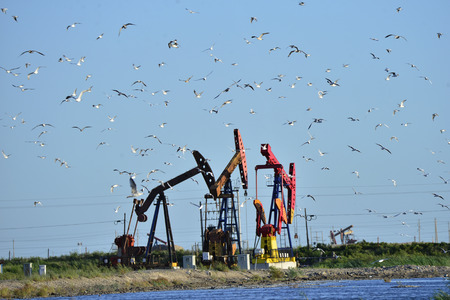 Oil pump and a  migratory birds