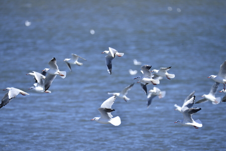 The birds at the sea
