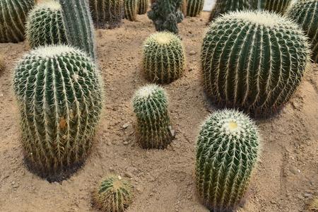 Spiny tropical plants Stock Photo