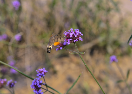Bee with the flowers