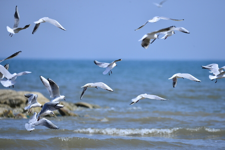 Seagulls fly in free Banque d'images