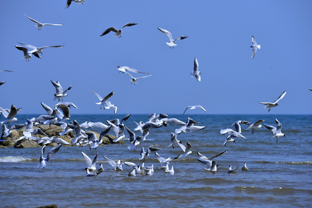 Seagulls fly in free 写真素材