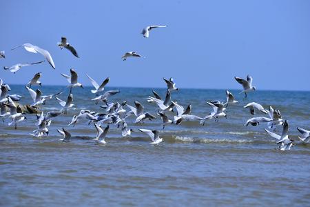 Las gaviotas vuelan gratis