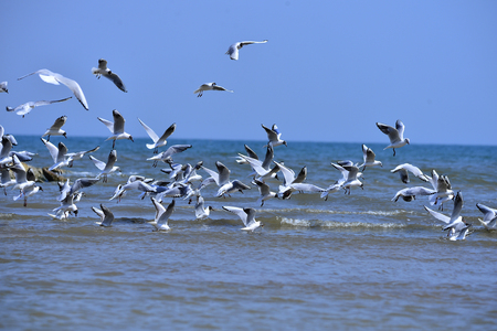 Seagulls fly in free