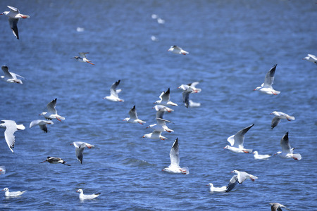 The birds flying on the sea