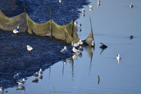 The birds of the sea 免版税图像