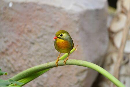 The outdoor fringillidae birds in the park