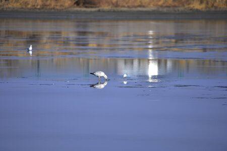 A beautiful bird in wetlands