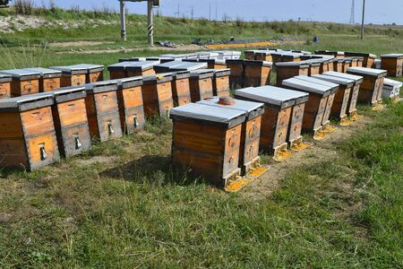 The bee hives in outdoor
