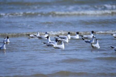 Seagulls fly in free Imagens