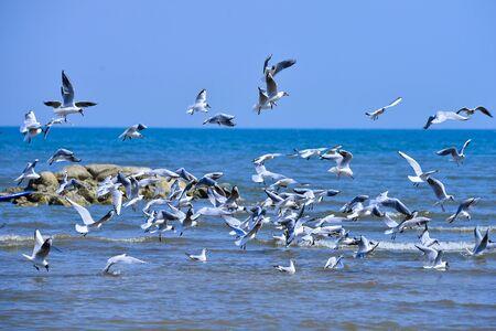 Seagulls fly in free Stock fotó