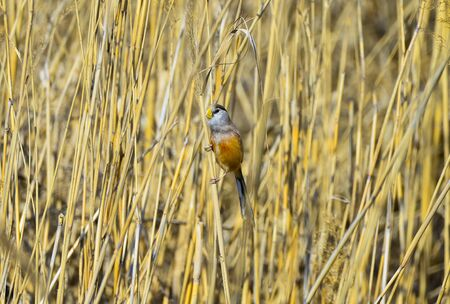 A bird in the reeds
