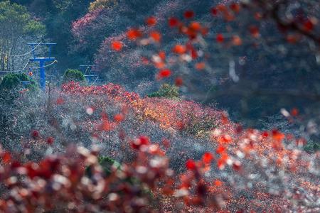 秋の丘の中腹のシーン