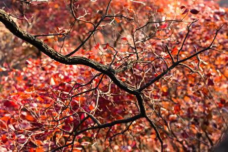 autumn leaves at tree